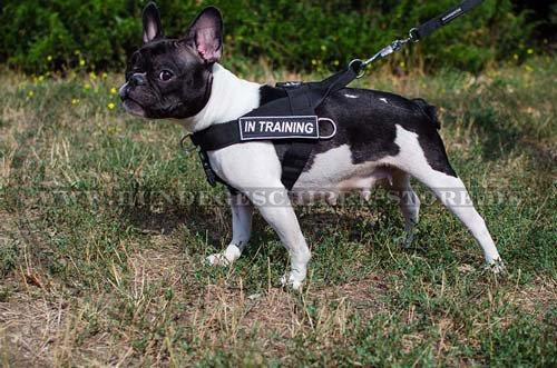 All-Wetter Nylon Hundegeschirr Französische Bulldogge H17