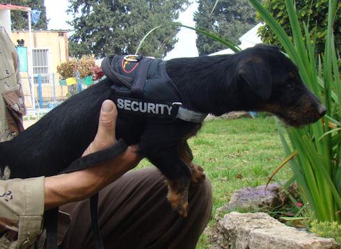 Hundemaulkorb fuer Rottweiler, Geschirr