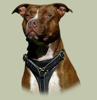 Dog Harness for Pitbull training and walking
