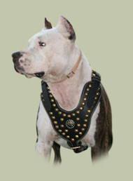 luxus geschirr aus echtem Leder Amerikanischer Pitbull kaufen