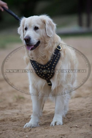 Leder Hundegeschirr mit Messing-Nieten für Golden Retriever