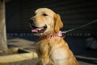 Hundehalsband Leder rosa für Golden Retriever, modisches Design