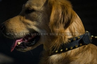 Leder Hundehalsband für Golden Retriever mit Messing-Spikes