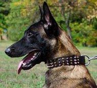 Leder Hundehalsband für Malinois Perfektes Design