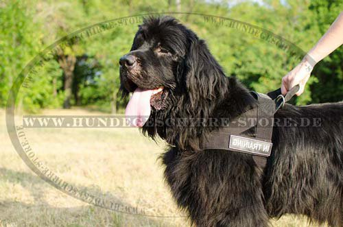 1 Haltbares Hundegeschirr Nylon Neufundland H17