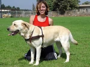 Labrador tracking Hundegeschirr