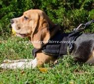 Allwetter-Hundegeschirr aus Nylon für Beagle