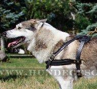 Zuggeschirr Hund | Leichtgewichtes Ledergeschirr 2015