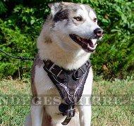 Hundegeschirr Gefilzt für West Siberian Laika - Hochwertigkeit!